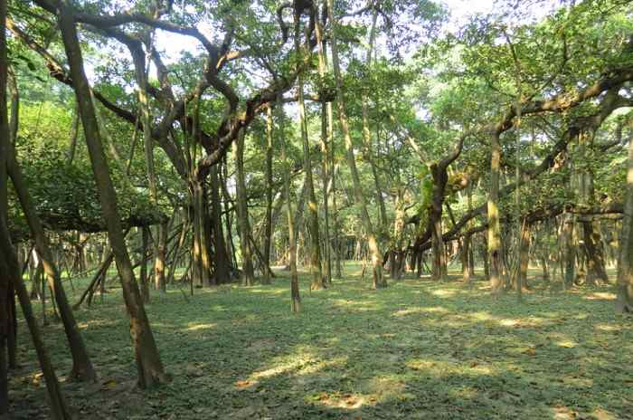 hindi essay on banyan trees A banyan tree is a huge evergreen perennial tree with branches a specialized type of root is found hanging from the branches, which is known as prop root that gives additional support to the stem.